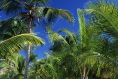 Kreuzfahrt Karibik Jamaica