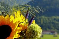 Sonnenblume Ausschnitt