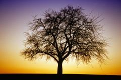 Sonnenuntergang Baum Gegenlicht Winter