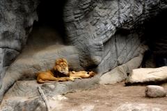 Löwe Höhle